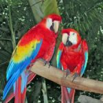 Visit Some Avian Friends at the World Parrot Refuge