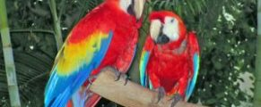 parrot refuge center on Vancouver Island