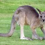 Australia's Ahhhhh Factor