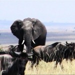 Where to See Wildlife in Kenya