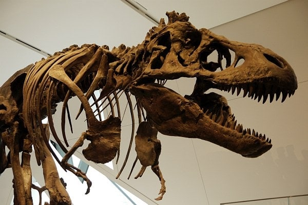 T-Rex Guarding at Royal Ontario Museum in Toronto