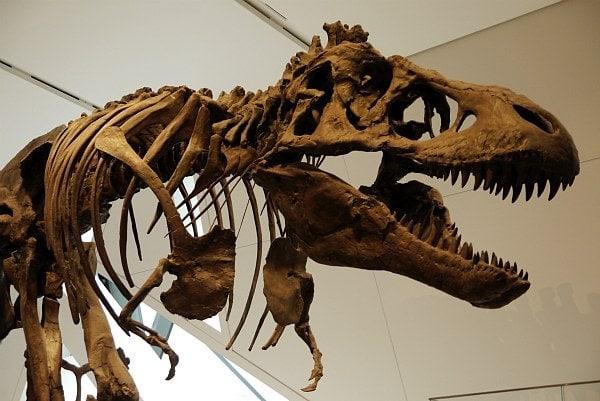 T-Rex Guarding at Royal Ontario Museum in Toronto