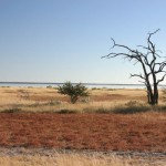 Namibia: Home to Wildlife & Extreme Sports