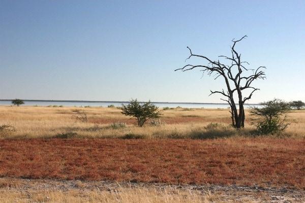 Etosha National Park in Namibia