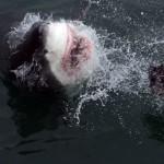 Water Adventure Thrills in Cape Town