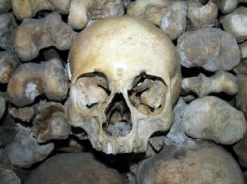 skeleton bones horror fright