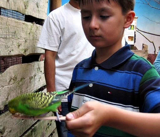 Feeding birds at Willawong Station, Woodland Park Zoo