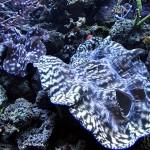 Tourist at Home: Visiting the Seattle Aquarium