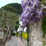 Photo Friday: Wisteria on Capri