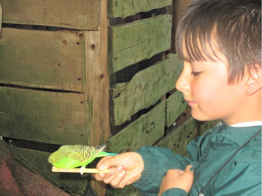 feeding birds at willawong station at woodland park zoo seattle