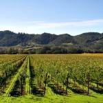 Postcard from Napa:  National Cabernet Day