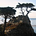 Postcard:  Cypress of Big Sur
