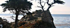 Cyprus trees along big sur