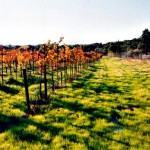 A Month of Sonoma Winery Visits
