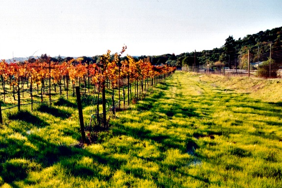 winery vineyard in sonoma