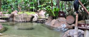Fish therapy pool