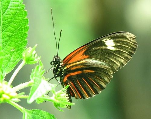 california butterfly photo