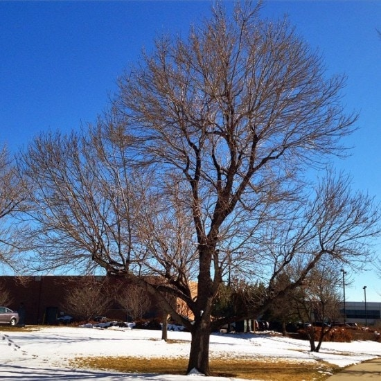 Blue skies and snow on the ground in Denver, Colorado