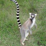 Tuesday Deal Day:  15 day Bike & Hike Wild Madagascar