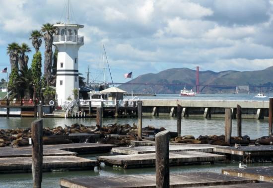 San Francisco sea lions and golden gate bridge