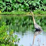 Postcard from Lake Apopka