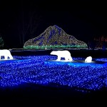 Festive Zoolights at Point Defiance Zoo & Aquarium