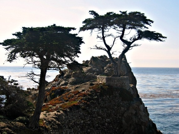 Cyprus trees along big sur