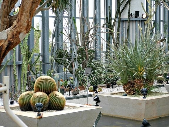 museum of plants
