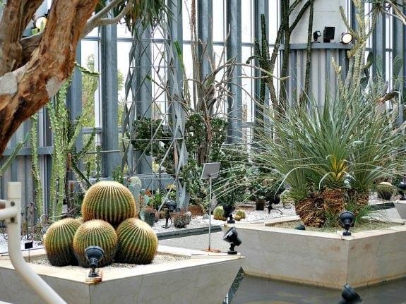 museum of plants
