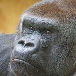 Celebrate World Wildlife Day