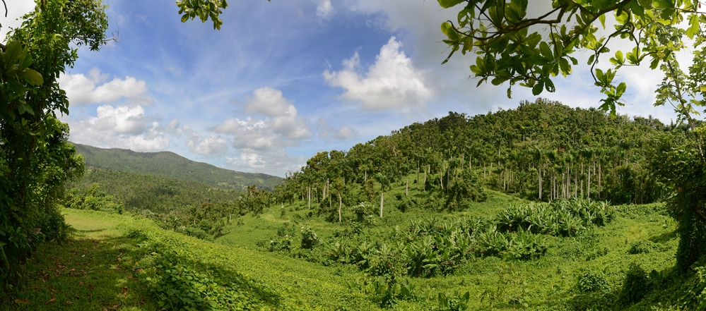 Panoramic view of El Yunque National Forest